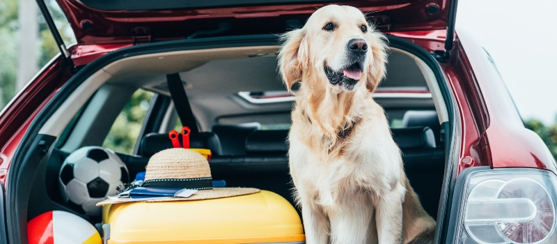 Dog-in-car-stopped